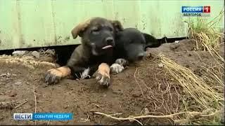 видео В Белгороде пройдет акция «Котята в добрые руки»