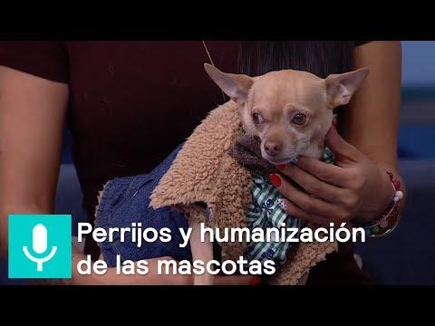 Disminuyen nacimientos y aumentan adopciones de 'perrhijos' en México - Al Aire con Paola