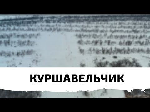 Куршавельчик   Аэросъёмка Волгоград