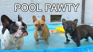Pool Party With Three Dogs