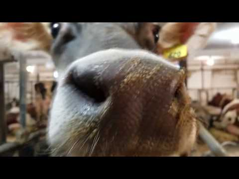 Wallace Dairy Farm - Breakfast on the Farm