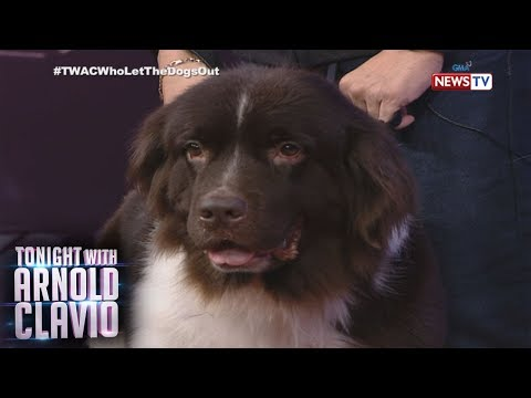 Tonight with Arnold Clavio: It's a Pet-malu day sa 'TWAC'