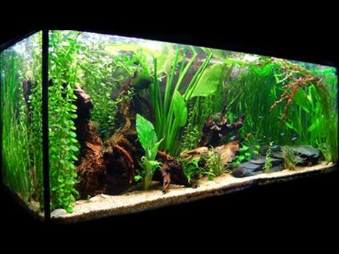 acuario tropical con multitud de especies de peces On peces para acuario comunitario tropical