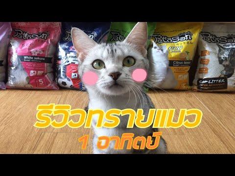 รีวิวทรายแมว 1 อาทิตย์ + สอนล้างกระบะทราย💕🌼 || FANGFUU