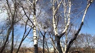 Весна из окна. Харьков.(Харьков., 2015-03-18T07:59:34.000Z)