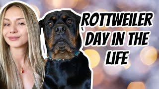 A day in the life owning a Rottweiler