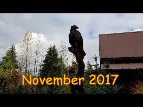 2017 11 22   AVSp, V 001   Scott and Becky's landscaping