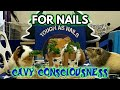 GUINEA PIG BOWLING #5 : Nails Style – PUZZLE, TOY & GAME – Creative Feeding Black Sabbath Fluff
