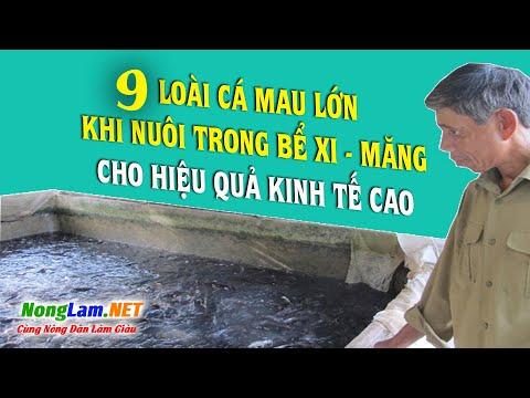 Gợi ý 9 Loài Cá Thích Hợp Nuôi Trong Bể Xi Măng Mau Lớn,  Hiệu quả Cao