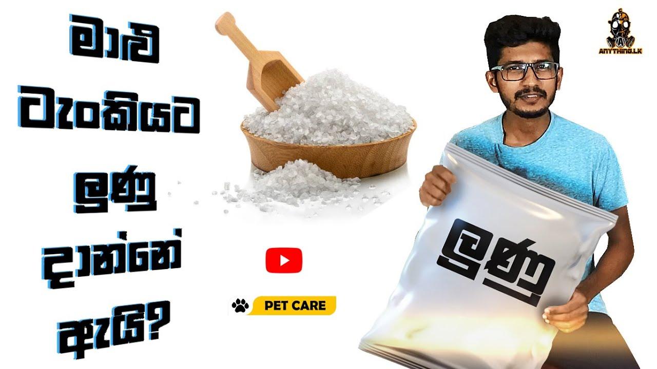 මාළු ටැංකියට ලුණු දාන්නේ ඇයි? | how to add salt into your fish tank | Anything.lk