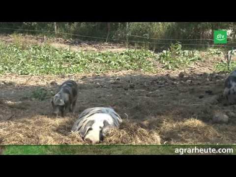 Tierleasing: Biofleisch aus der Lohnmast