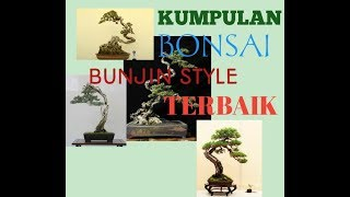 Bonsai bunjin juara.