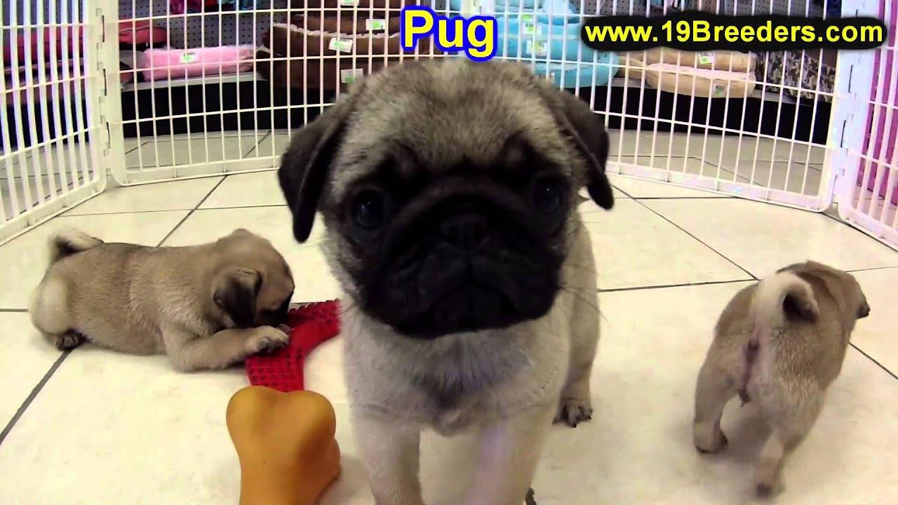 Homeward Bound Pug Rescue and Adoption of Oklahoma