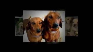 Como Educar A Un Perro Tu Mismo | Como Educar Perros | Lo Merece No?