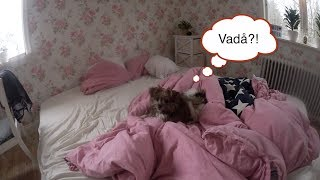 Städning och Mårten Gås! - Vlogg 10:e November