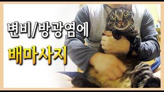 고양이 변비, 방광염에 효과 좋은 배마사지