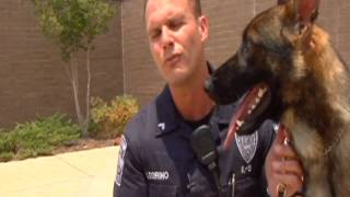 WPD K9 recovering after being attacked by man