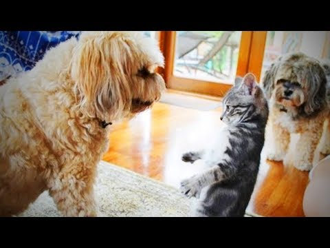 Dogs Meet Kittens for the First Time 🐶😻 Funny Pets Playing Together (Full) [Epic Life]