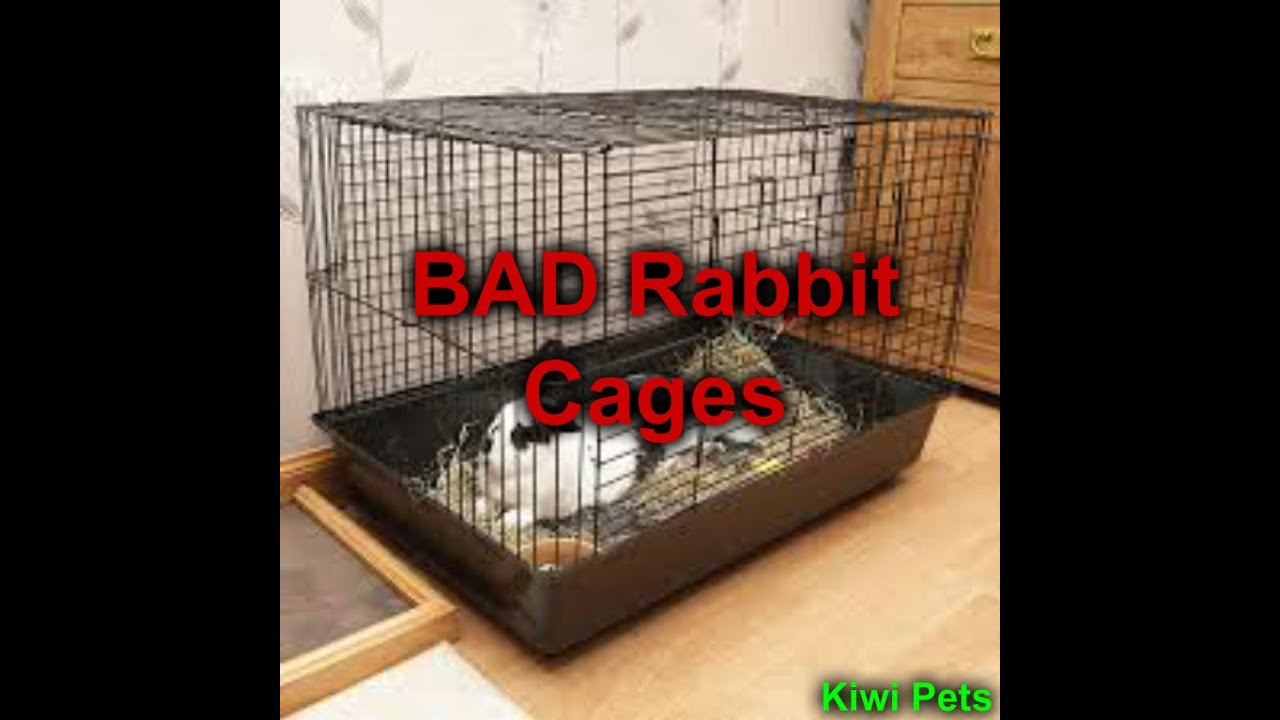 Bad rabbit cages kiwi pets youtube - How to make a rabbit cage ...