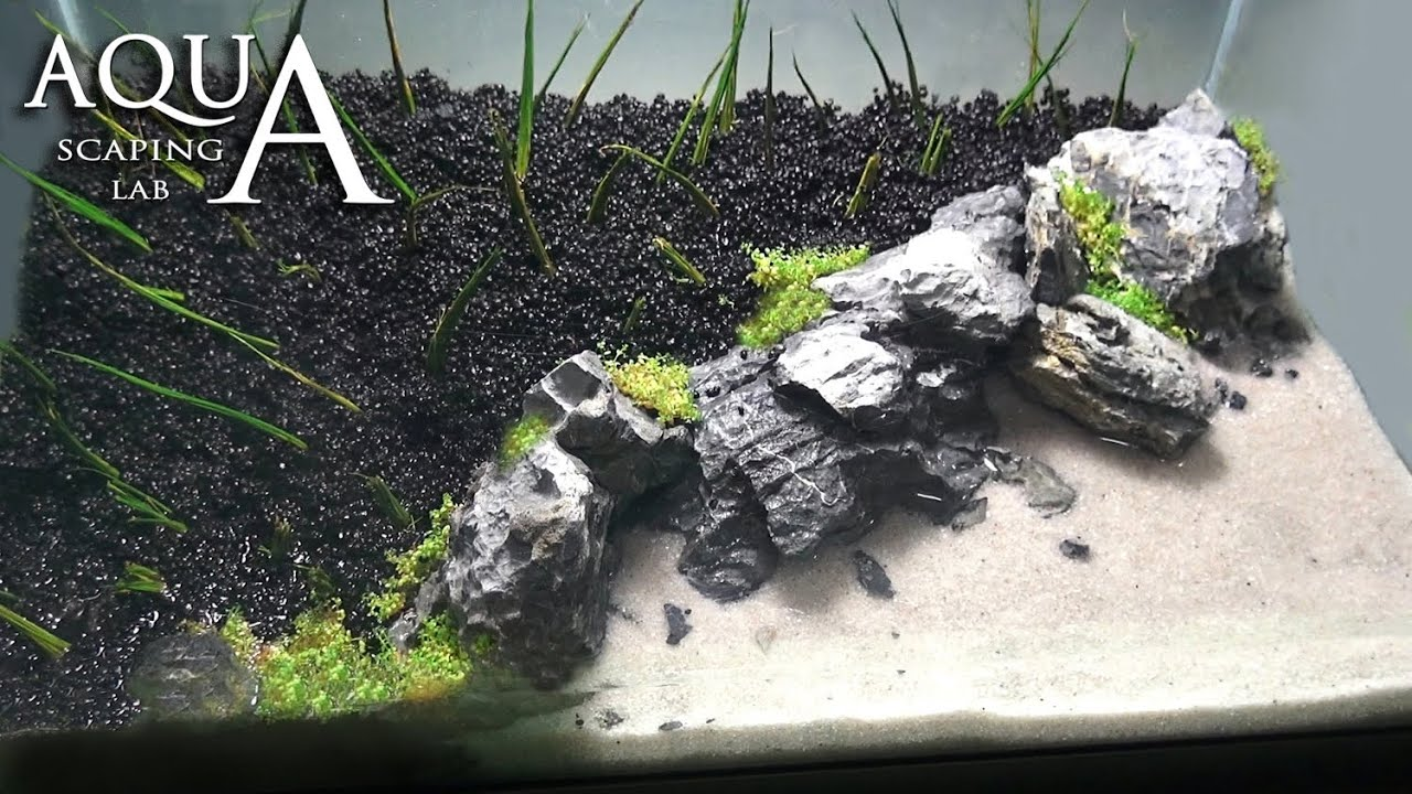 Aquascaping Lab - Tutorial Iwagumi Aquarium