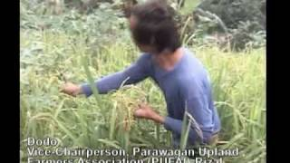 Planting Rice Is Never Fun: The Rice Crisis in the Phlippines