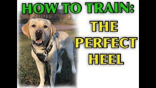 Dog Training Tutorial: Perfect Heeling!