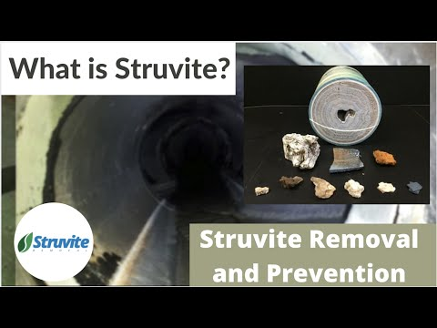 What Is Struvite?