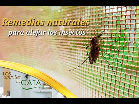 Soluciones pr cticas para alejar a los insectos de nuestra - Como ahuyentar a los mosquitos ...