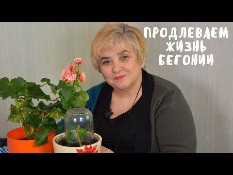 НЕ СПЕШИТЕ ВЫБРАСЫВАТЬ БЕГОНИЮ ПОСЛЕ 8 МАРТА. Мои цветы. Мой опыт.