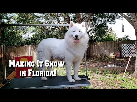 Grooming My Husky | Blow Out