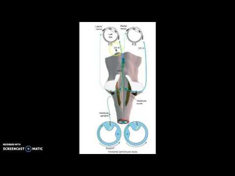 Vestibuloocular reflex