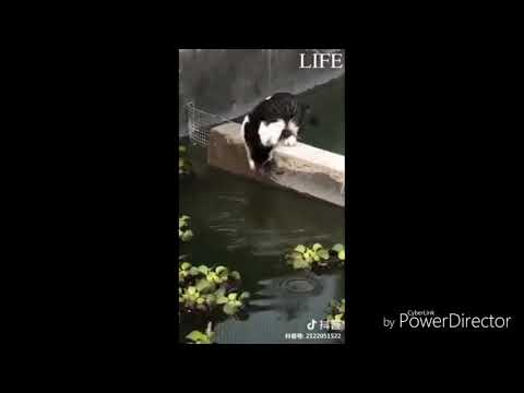 CATS are NINJAS,, adorable cats in their action star personality