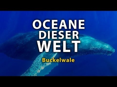 Ozeane dieser Welt