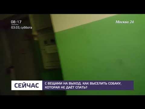 Шалатон Елена Алена Викторовна напала на репортеров Москва24.