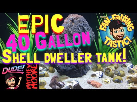 Epic 40 gallon shell dweller tank!