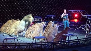 Ringling Brother's Big Cats (Tigers and Lions) show