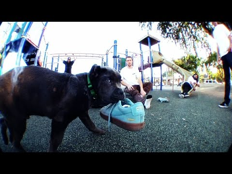 """Supreme Drops """"KING PUPPY"""" Video by William Strobeck for New Nike SB Blazer Collab"""
