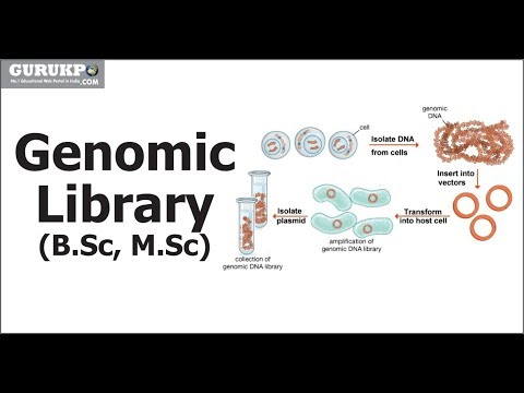 Gene Library | Genomic Library and cDNA Library(B.Sc, M.Sc)