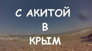 С АКИТОЙ В КРЫМ