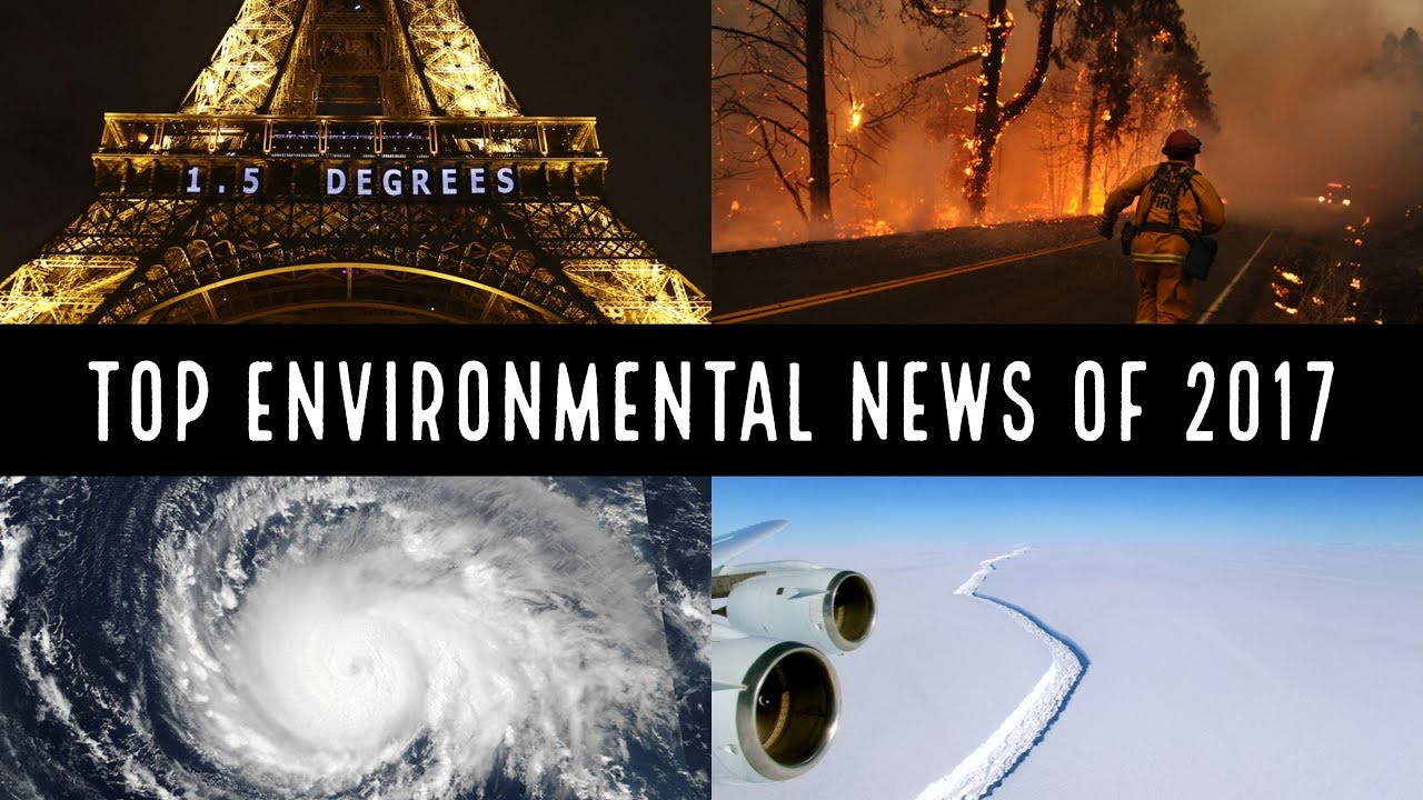 environment news amp features the telegraph