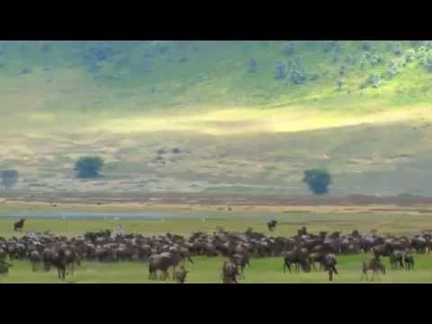 Ngorongoro Conservation Area Travel Video