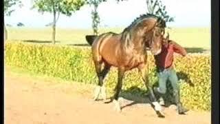 Landkönig - Eurequine Stallion
