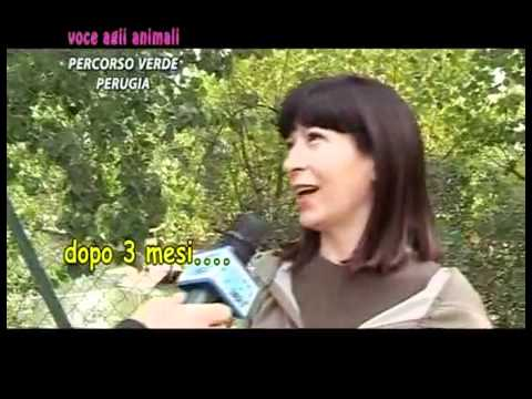 Voce agli animali di Mirko Loche