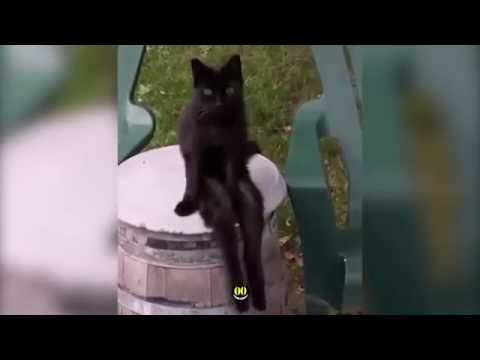 Black Cat Sits with legs dangling || HiCatHalloween