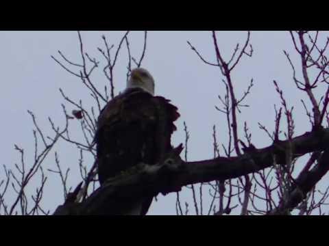 NORTH AMERICAN BIRDS !