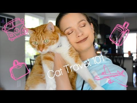 HOW I TRAVEL WITH MY CAT | LONG DISTANCE CAR RIDES