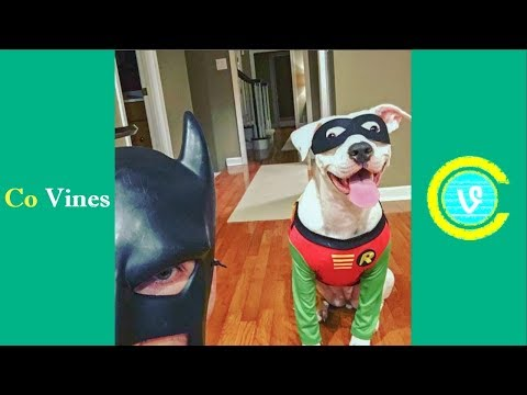 Download Youtube: Try Not To Laugh Watching BatDad Compilation 2017 (W/Titles) Funny BatDad Videos