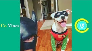 Try Not To Laugh Watching BatDad Compilation 2017 (W/Titles) Funny BatDad Videos