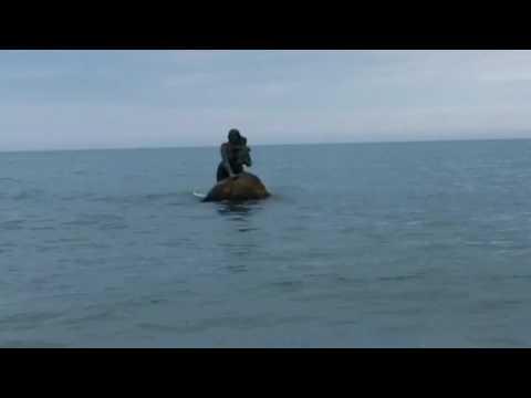 Пляжные русалки сосочки фото 730-29