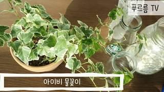 아이비 물꽂이 /수경재배 방법식탁 위 센터피스(cent…